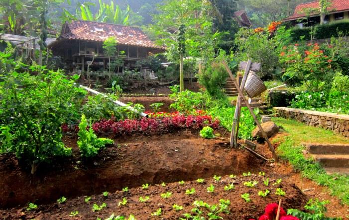 Kebun sayur aneka warna berpadu dengan rumah ramah lingkungan di sekitarnya